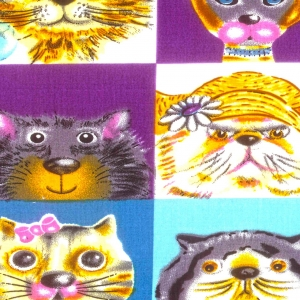 F - Gato Color